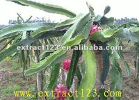 Pure natural Dragon fruit extract/juice powder