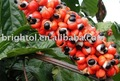 High quality Guarana Extract