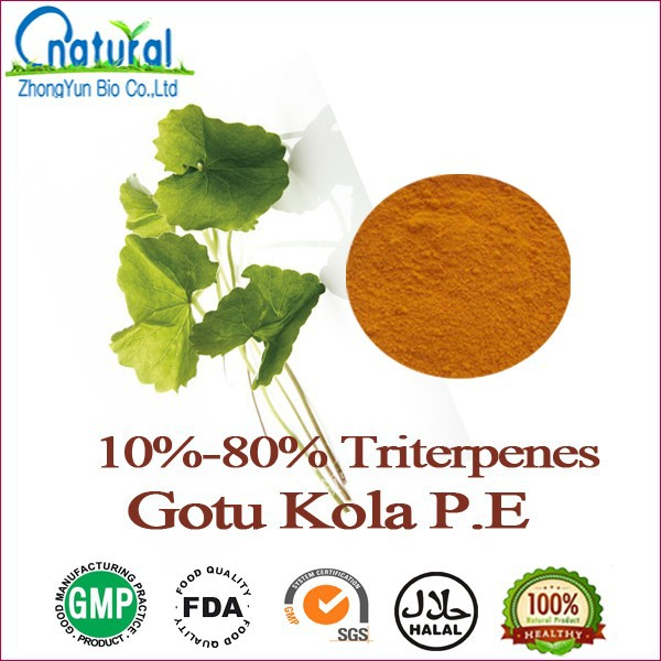 High Quality Gotu Kola P.E.Triterpenes 10%-80%