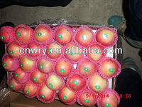 Fresh Apple fruit/scientific name of fruits in China