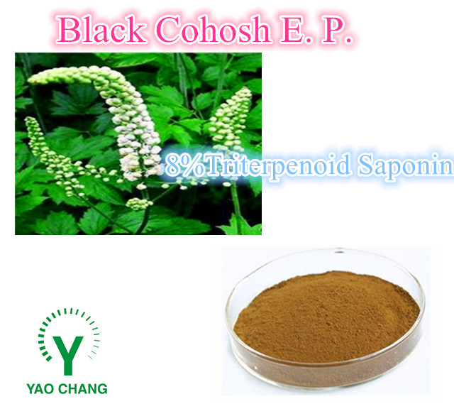 High quality Free Sample Black Cohosh Extract