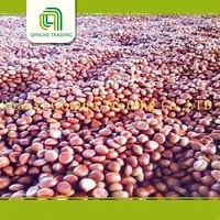 Hot selling fresh chestnut dried organic chestnuts frozen chestnut best price with low price