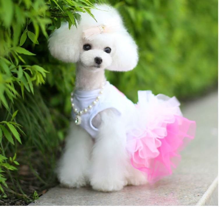 2018 hemu luxury lace pet skirt princess cat apparel with dog dress
