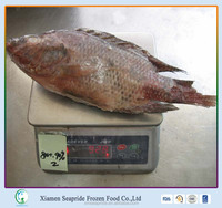 Food Limited Frozen Black Tilapia / Red Tilapia