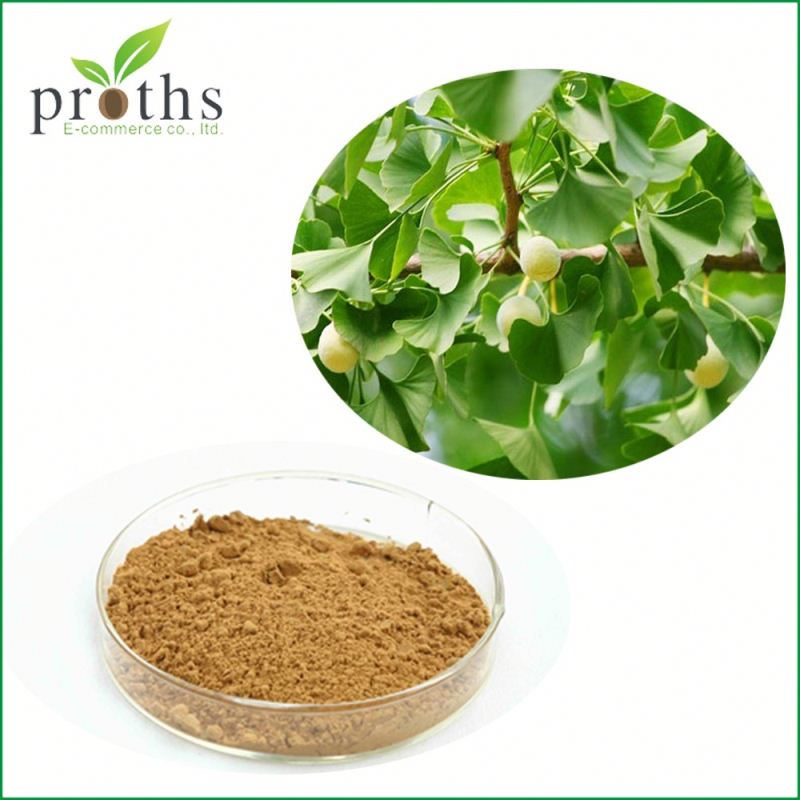 Healthy product 100% pure and natural ginkgo biloba extract