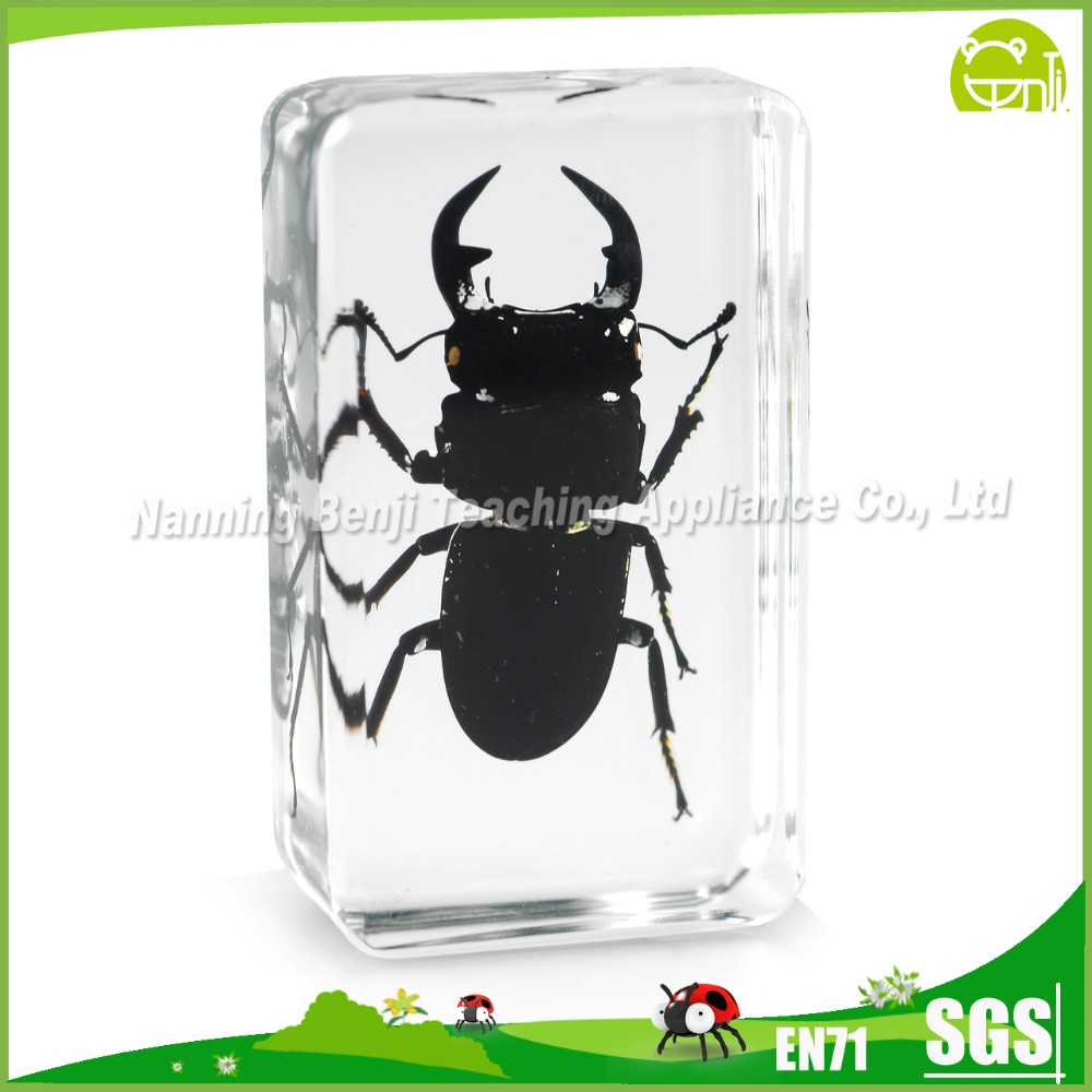 Real Insect Specimen Acrylic Resin Product for Teaching Aids