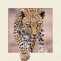 Custom made wall art decor 5D animal painting