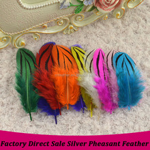 Factorty Direct sale Dyed 5-8cm Natural Silver Pheasant Feathers