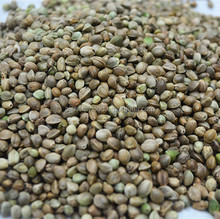 Top Quality Sun Hemp Seed For Sale