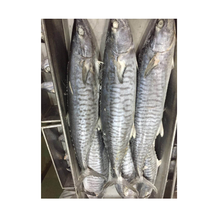 Frozen Spanish Mackerel Fish For The Market Sale and Mackerel fillet