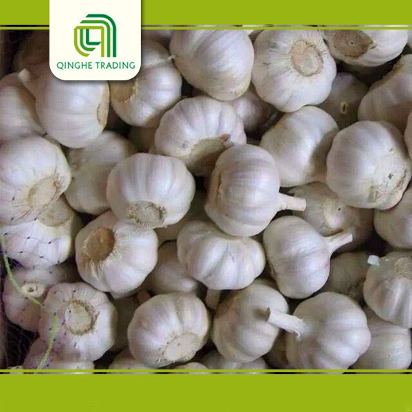 fresh high quality natural garlic for sale / good farmer garlic