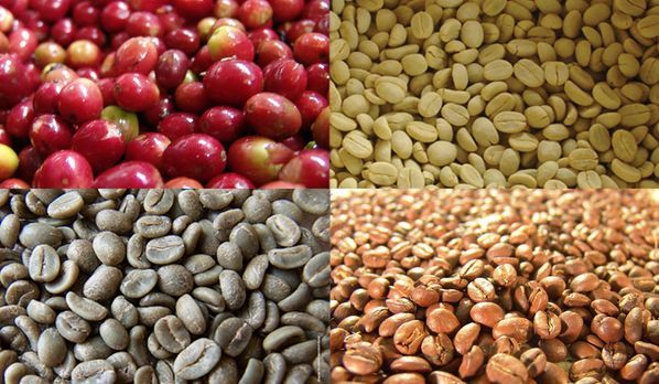 ECOCERT SA Arabica green bean coffee for wholesale laos certified