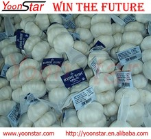 Wholesale Fresh Normal/Pure Natural Garlic with factory price