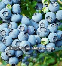 artificial blueberry/bulk frozen blueberries/organic blueberries