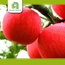 cheap local fruits and vegetables fresh red fuji apple with high quality