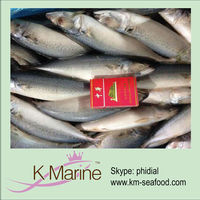China supplier frozen mackerel fish