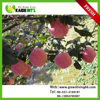 Red Mature Fuji Apple Fruit