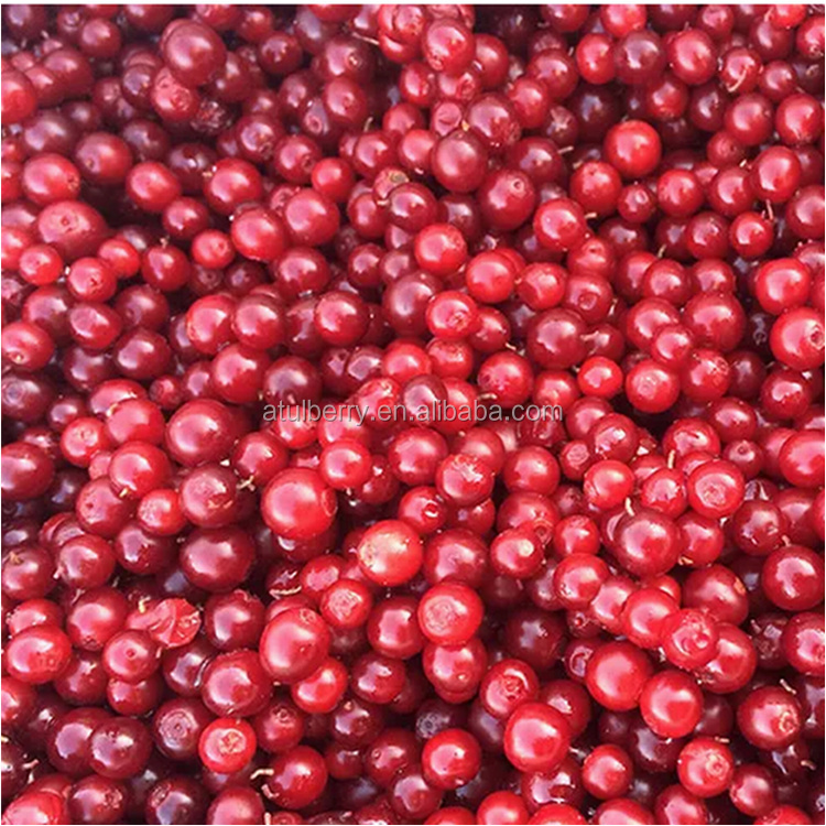 Factory Supply High Quality Low Price IQF Cranberry Fruit with HACCP