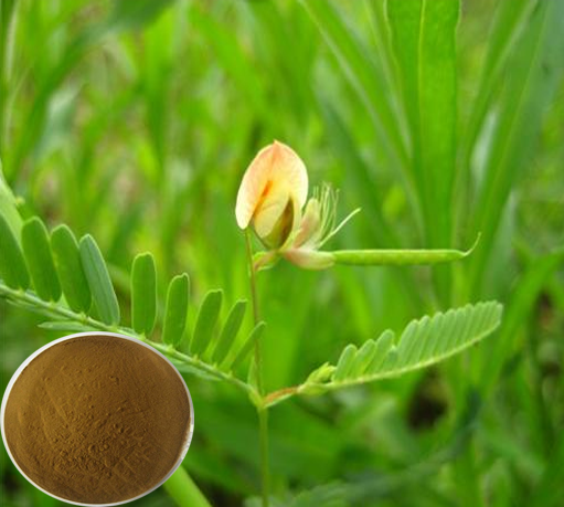 Top Quality Cassia mimosoides extract powder /Nomame Semaherb P.E