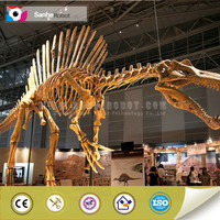Spinosaurus skeleton replica science museum equipment