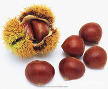 cheap new fresh chestnut with better service