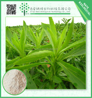 High Quality Stevia Extract Stevioside 90%-95% Steviol Glycoside 95% from Sweeteners Supplier