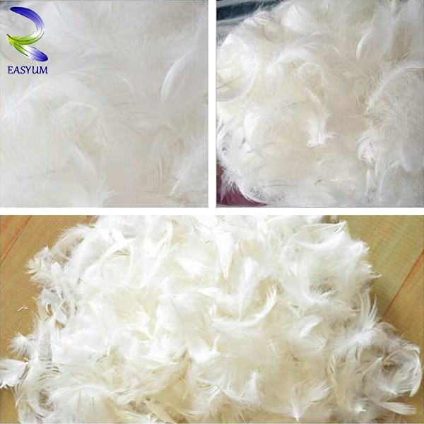 China supplier hot sale down and feather duck feather