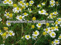 Hot Sale German Chamomile Extract
