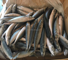 New Arrival Frozen Pacific Mackerel Fish For Sale