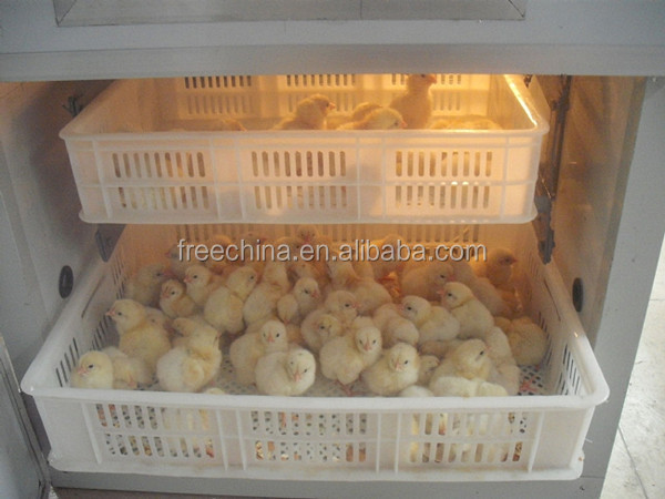 how to set eggs in incubator