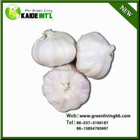 2014 green food white garlic in China(4.5cm,5cm,5.5cm.6cm up)