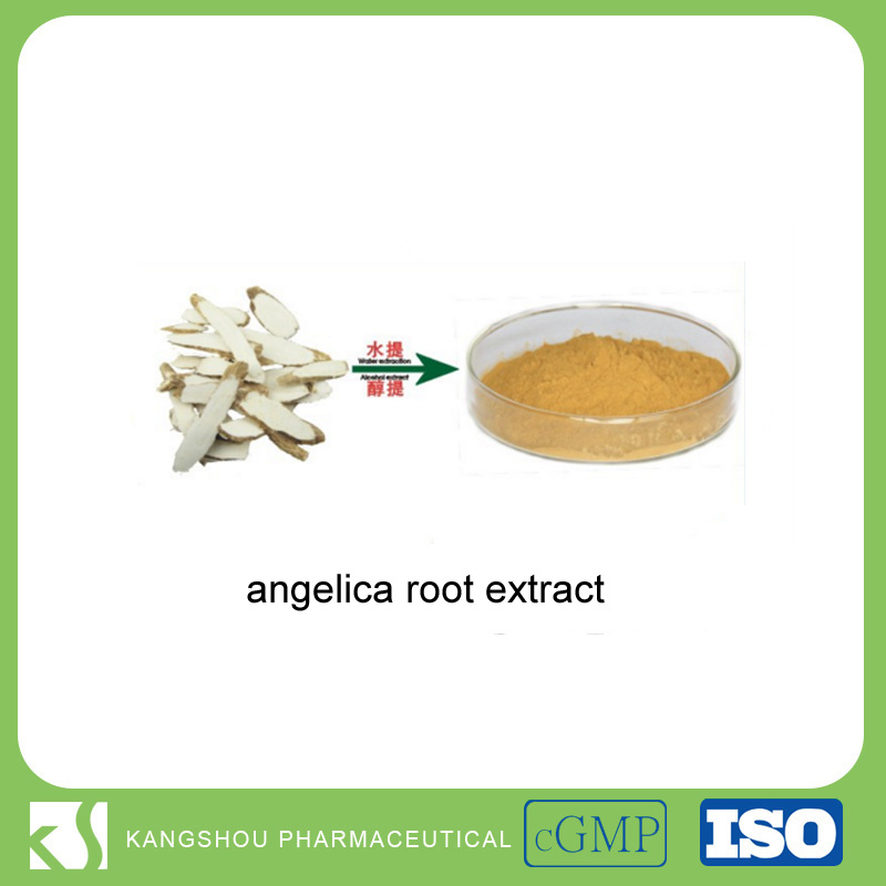 GMP Manufacturer Angelica Extract 1% Ligustilides Powder