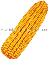 fresh good quality choosen F1 corn vegetable seeds