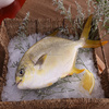 Fish Farms Frozen Seafood Golden Pomfret/Pompano Fish best selling products