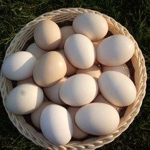 egg price india blue and white prices in egypt