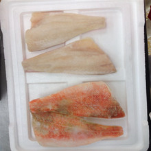 New Season Good Quality Frozen Atlantic / Pacific Red Fish Fillet