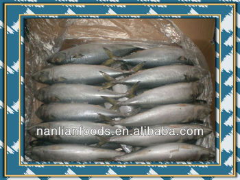 pacific mackerel fish for sale 300-500g