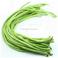 Dou jiao seed green plant long bean for seeds ornamental plants