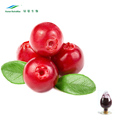 Natural Cranberry Extract Anthocyanidins Powder 25%, 10%-50% Proanthocyanidins with Best Quality