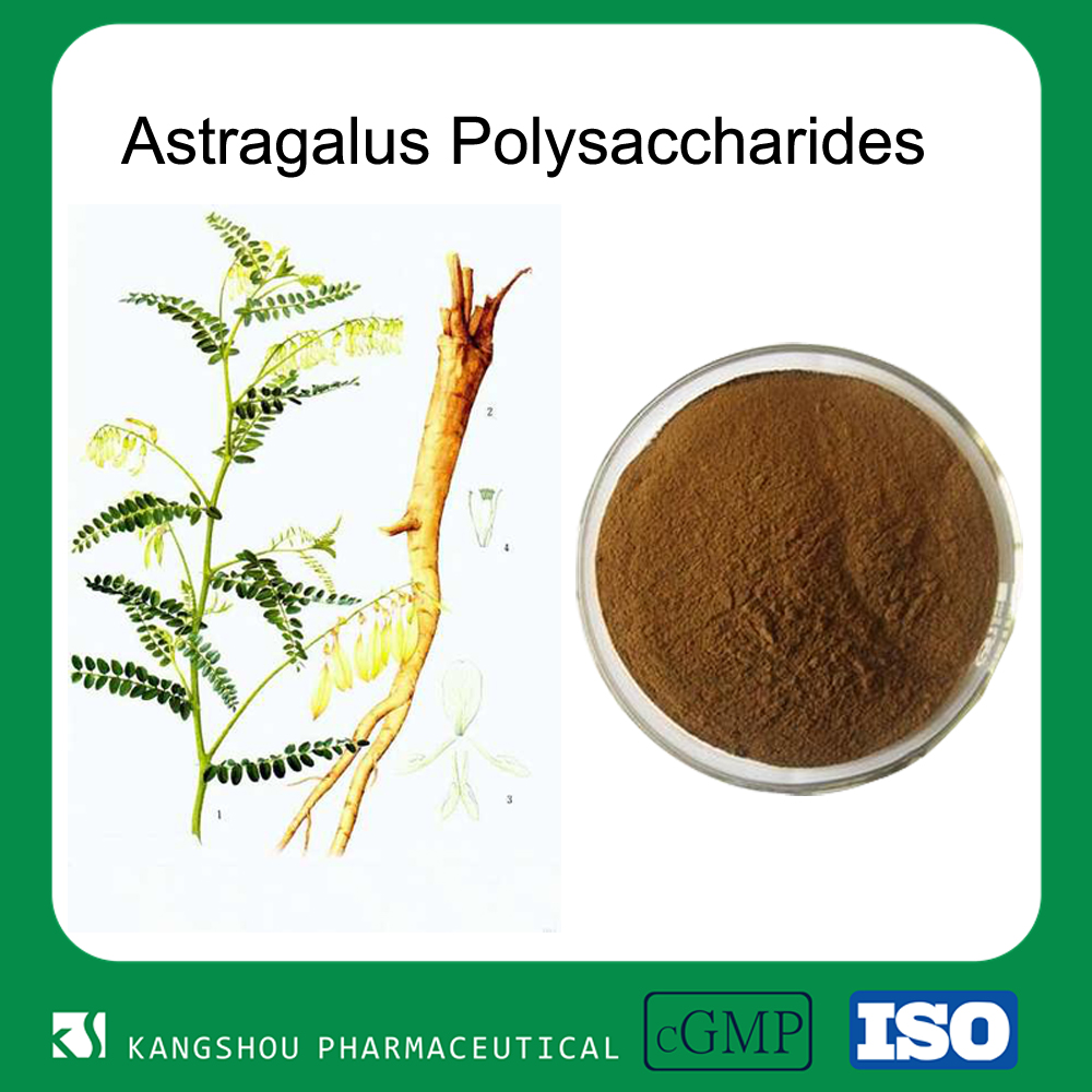 Organic Anti-aging Plant Astragalus Root Extract 20%Astragalus Polysaccharides