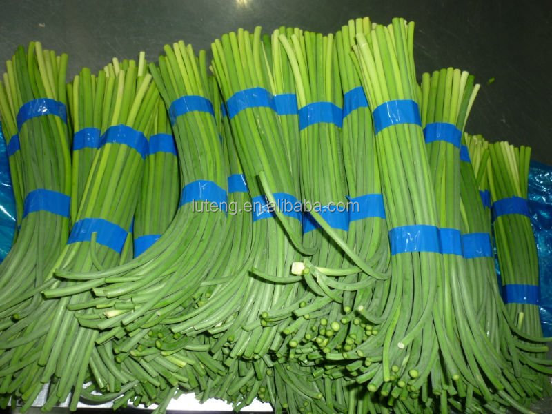 2015 New Garlic Stems Price In China With Good Quality