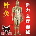 Pure copper male body human model with meridians and acupuncture points
