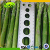 Green Vegetables Price List Of Frozen Asparagus