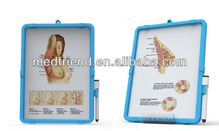 Table Stand wth Anatomical Chart