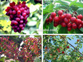 Chinese supplier organic foliar fertilizer for nursery fruit trees