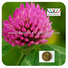 High quality Kosher & HACCP treat eczema psoriasis herbal extact Trifolium pratense Purple clover extract
