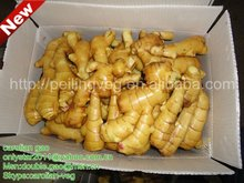 buy fresh young ginger(best price)