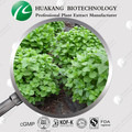 Manufacture supply Lemon Balm Extract ,Rosmarinic acid 3%-5%
