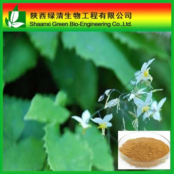Men's Sex Health Powder Icariin 50%-98% Epimedium Extract/ Epimedium Extract Icariin/High Quality 98% Icariin Powder