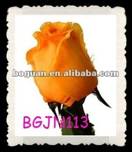 Fashion Wedding Favor Orange Feather Rose Flower